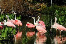 Best Summer Vacation Ideas in St. Augustine Florida
