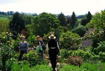 английские сады и огороды