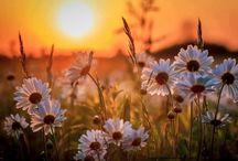 Kwiatowe pejzarze