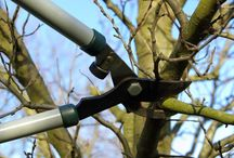 Tree Pruning / Practical tips and expert advice on pruning trees and shrubs.