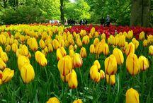 Holland (Olanda)
