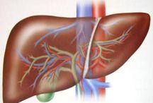 curare gli organi