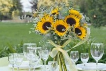 """Sunflowers, Dandelions and Other Smile-stealing things / I love sunflowers, I love Dandelions.  """"I have lost my smile, But it's alright, The Dandelion has it."""" ~Unknown"""
