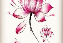 lotus tatty's