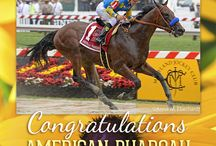2015 Preakness Stakes / Images from the 2015 Preakness Stakes / by Blood-Horse