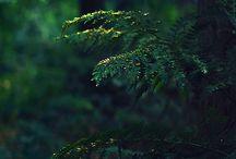 Nature / by Juliane Carneiro