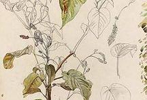 Plants-Drawing