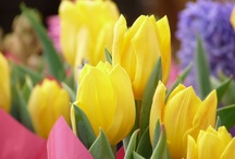Blooming Bulbs!Tulips!Hyacinths!Daffodils and more... / by Marina Aligizaki