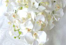 Bouquets and flower arrangements
