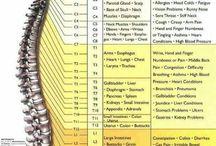Human Body Science