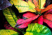 Leaves - petals