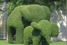 In The Garden / by Darla Wallace