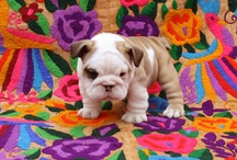 OMGPUPPIES / by Sunshine Nugget