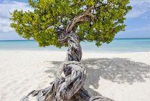 **TREES** / by Elizabeth Garcia Pointer