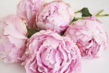 Flowers / Flowers, floral, flower arrangements, bouquet  / by Sydonie Georgia