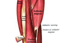 Piriformis Syndrome / Experiences by a piriformis syndrome severe pain victim!
