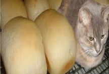 Funniest cat memes of all time  / Funniest cat memes of all time