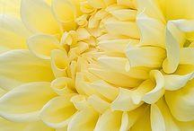 Yellow optimism