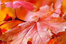 VEGETALES: Leaf / by Pepa Llausas