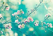 Flowers, trees, gardens