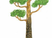 Ylli: metsä