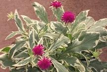 Plants I Need: Pink