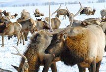 Jackson Hole, Wyoming / by Buffalo Jackson Trading Co