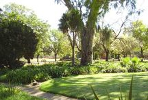 Bloemfontein Zoo / Bloemfontein Zoo was established in 1906.  Its the home to various wild and tame animals, such as tigers, lions, snakes, primates, birds and other South African Animals. For more information, please visit our website link below: http://www.bloemfonteinguide.co.za/bloemfontein-zoo/