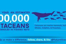 Cetacean Bycatch Mini Infographics / Cetacean bycatch facts
