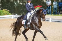 Rider Profiles / Get to know top equestrians in the industry