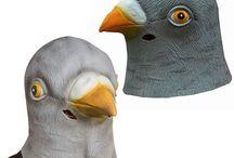holub / pigeon