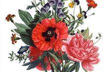 Vintage floral illustration