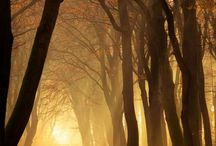 Trees, forest / Деревья, лес