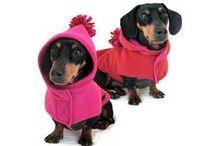 capas cães