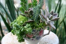 Succulents in recycled vessels