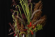 Botanical Photography / Beautiful large format photography capturing the fine details of nature.