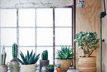 Planting Indoor Trends