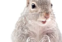 For the Love of Squirrels / Squirrels