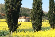 Tuscany, Italy / Tuscany