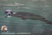 Brookfield Zoo Series 1 / Visiting Brookfield Zoo August 2015