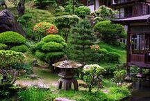 japan gardens / kert