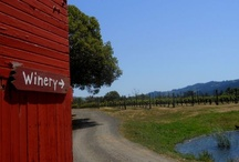 Vineyard Flora and Fauna / There is so much going on in the vineyards. Check out the diverse flora and fauna.
