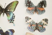 butterflies (and tatoo inspiration)