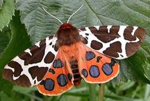 Moths, butterflies and insects