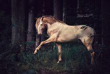 Horses / Carina Maiwald Equine Images - Horse Photography