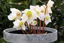 my pot gardening