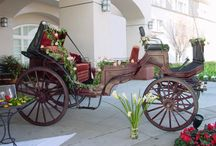 The Burgundy Carriage / Burgundy Vis a Vis carriage by Troyer