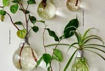 Plantas Domésticas Interiores