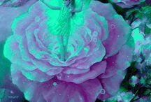 Tarjetas de rosas y hadas