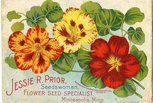 Seedswoman